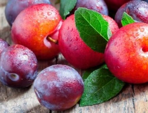 Plums and pluots and apriums, oh my!