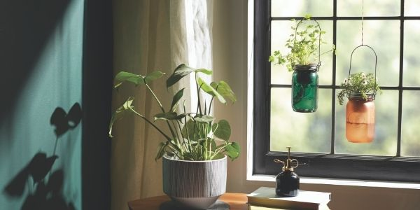 self watering herb jars
