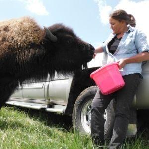 HGB Bison Ranch