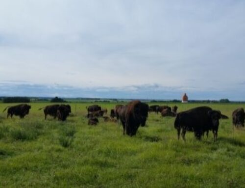 Meet the Producer: HGB Bison Ranch