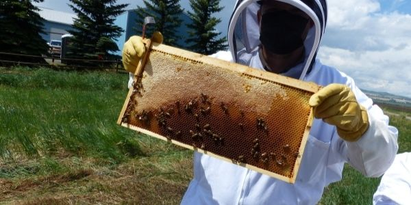 hanging with honey bees